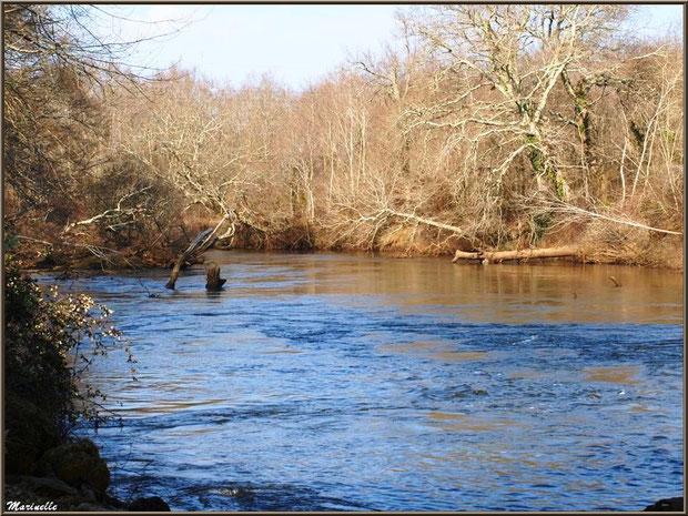 La Leyre en hiver, Sentier du Littoral au lieu-dit Lamothe, Le Teich, Bassin d'Arcachon (33)
