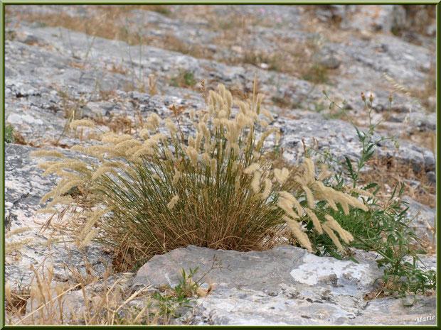 Herbacées en fleurs dans les pierres de l'aqueduc à Fontvielle dans les Alpilles, Bouches du Rhône