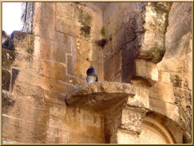 Pigeon perché parmi les vestiges d'une belle demeure, Baux-de-Provence, Alpilles (13)