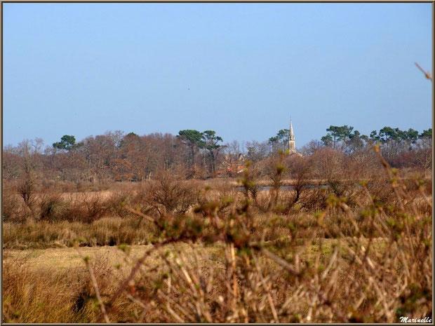 Végétation des marais entourant les réservoirs et le clocher de l'église d'Audenge au lointain, Sentier du Littoral, secteur Domaine de Certes et Graveyron, Bassin d'Arcachon (33)
