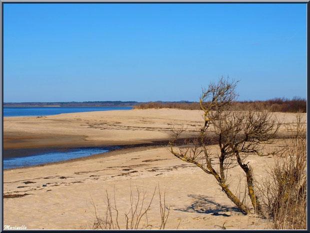 La plage hivernale et ses tamaris, le Bassin, Sentier du Littoral, secteur Moulin de Cantarrane, Bassin d'Arcachon