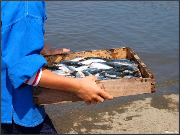Déchargement des cagettes de sardines - Fête du Retour de la Pêche à la Sardine 2014 à Gujan-Mestras, Bassin d'Arcachon (33)