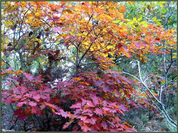 Forêt automnale sur le Bassin d'Arcachon (33)