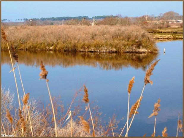 Un réservoir et ses reflets, Sentier du Littoral, secteur Domaine de Certes et Graveyron, Bassin d'Arcachon (33)
