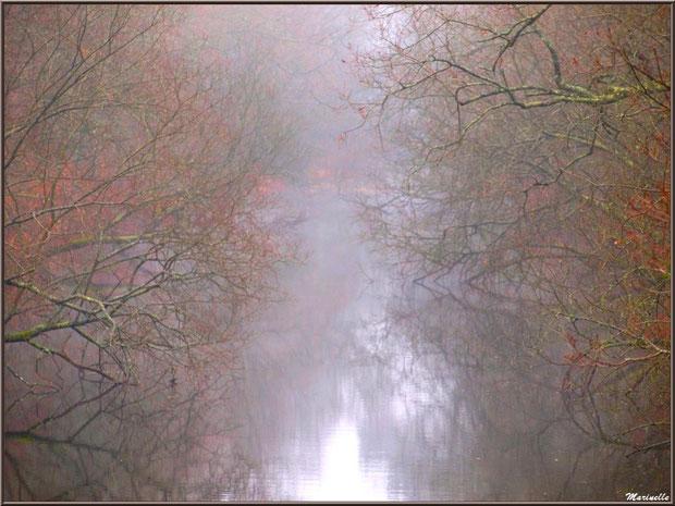Le Canal des Landes dans la brume au Parc de la Chêneraie à Gujan-Mestras (33)