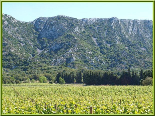 Le vignoble du Château Romanin au-dessous des Alpilles en toile de fond à Saint Rémy de Provence (13)