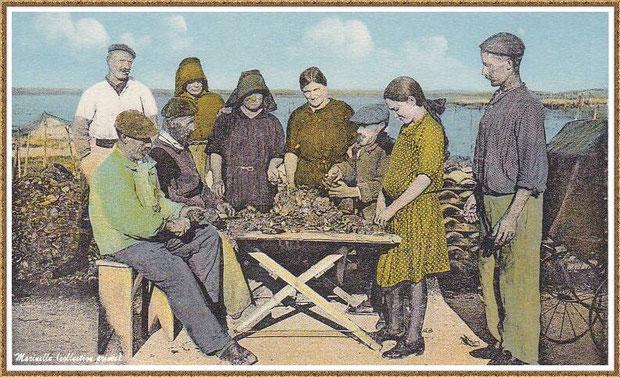 Gujan-Mestras autrefois : Ostréiculteurs au désatrocage des huîtres, Bassin d'Arcachon (carte postale, collection privée)