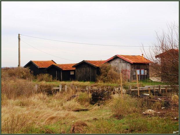 Gujan-Mestras Bassin d'Arcachon, le Port de La Mole