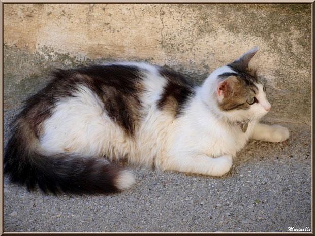 """Chat devant la """"maison au chats"""", village de Cucuron, Lubéron (84)"""