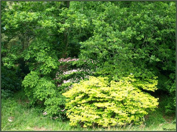 La Lande Dorée - Les Jardins du Kerdalo à Trédarzec, Côtes d'Armor (22)