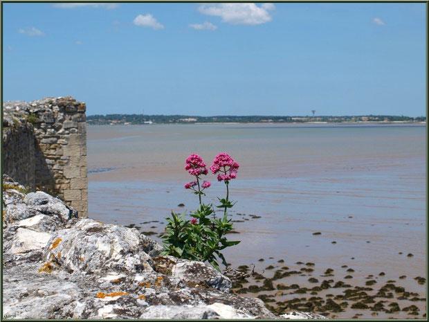 Vue sur La Gironde depuis les fortifications de Talmont -sur-Gironde, Charente-Maritime