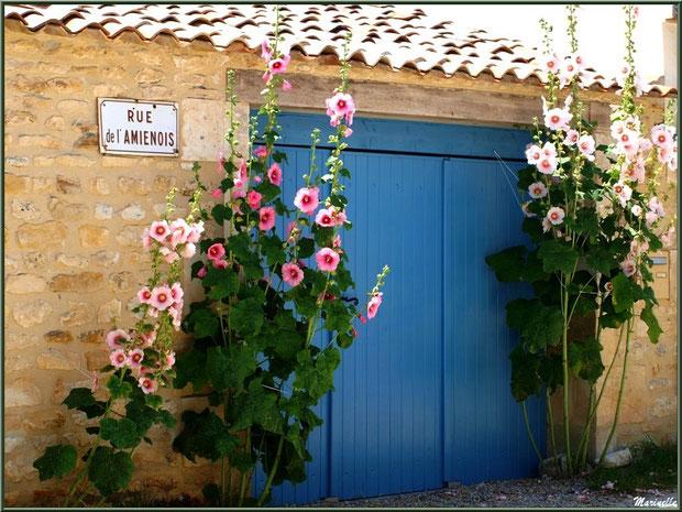 Entrée aux roses trémières, rue de l'Amienois,  à Talmont-sur-Gironde, Charente-Maritime