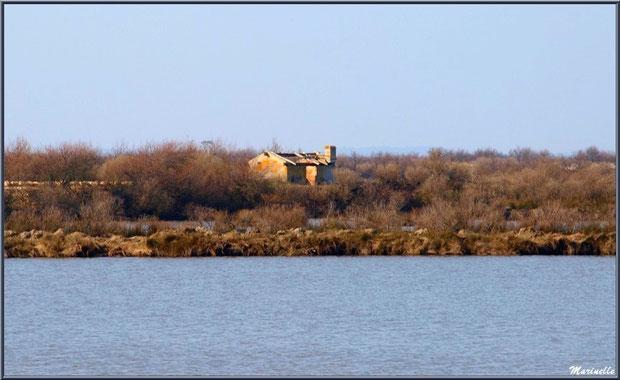 Ruines d'une ancienne maison d'un garde pêche-chasse au coeur des réservoirs, Sentier du Littoral, secteur Domaine de Certes et Graveyron, Bassin d'Arcachon (33)