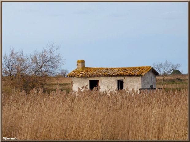 Ancienne maison de gardien de chasse et pêche, avec une écluse à sa droite, bord de La Leyre parmi les roseaux, Sentier du Littoral, secteur Port du Teich en longeant, Le Teich, Bassin d'Arcachon (33)