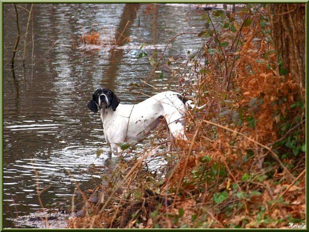Chien prêt pour la baignade dans le Canal des Landes au Parc de la Chêneraie à Gujan-Mestras (Bassin d'Arcachon)