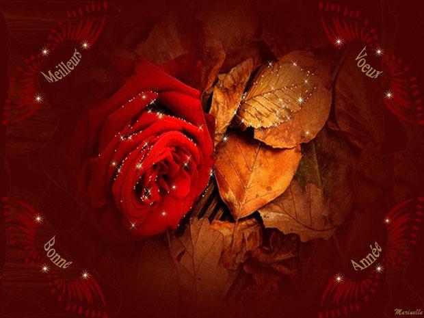 Meilleurs voeux et bonne année : rose rouge décor or