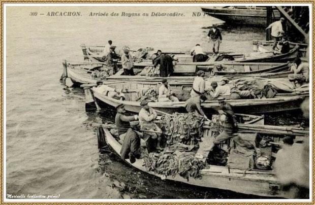 Retour de la pêche à la sardine (ou Royan), Bassin d'Arcachon (33)