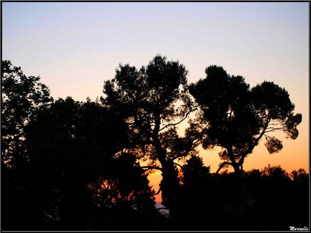 Coucher du soleil sur la pinède des Antiques à Saint Rémy de Provence, Alpilles (13)