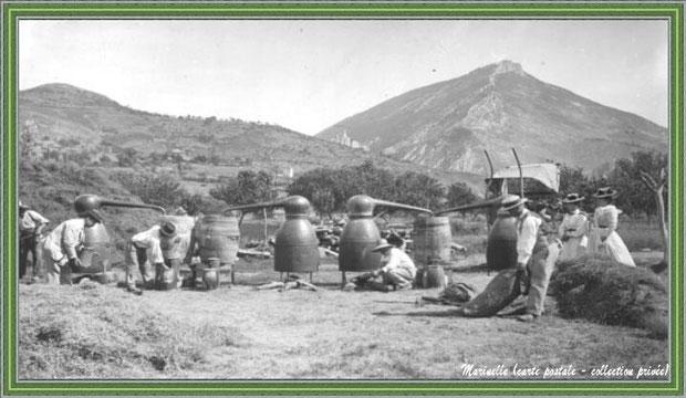 Autrefois... Distillation de la lavande vers 1900 (carte postale - collection privée)