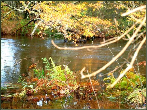 Végétation automnale et reflets en bordure de La Leyre, Sentier du Littoral au lieu-dit Lamothe, Le Teich, Bassin d'Arcachon (33)