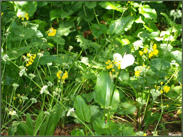 Le parterre de fleurs de la fontaine Saint Fiacre - Les Jardins du Kerdalo à Trédarzec, Côtes d'Armor (22)