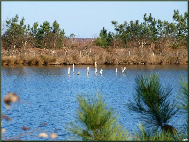 Végétation autour des réservoirs, en janvier, sur le Sentier du Littoral, secteur Moulin de Cantarrane, Bassin d'Arcachon