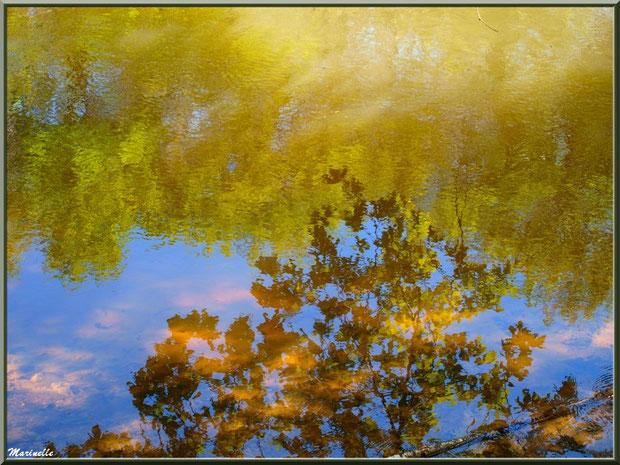 Reflets d'or sur La Leyre, Sentier du Littoral au lieu-dit Lamothe, Le Teich, Bassin d'Arcachon (33)