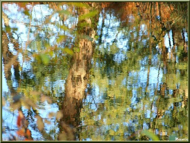 Reflets impressionnistes hivernaux sur le Canal des Landes au Parc de la Chêneraie à Gujan-Mestras (33)