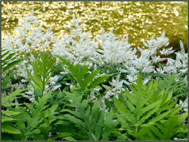 Astilbes en bordure du ruisseau et du petit étang - Les Jardins du Kerdalo à Trédarzec, Côtes d'Armor (22)