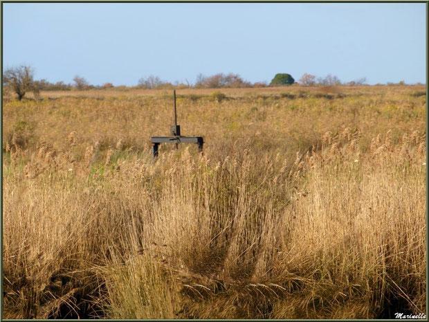 Ecluse au milieu des marais, Sentier du Littoral, secteur Port du Teich en longeant La Leyre, Le Teich, Bassin d'Arcachon (33)