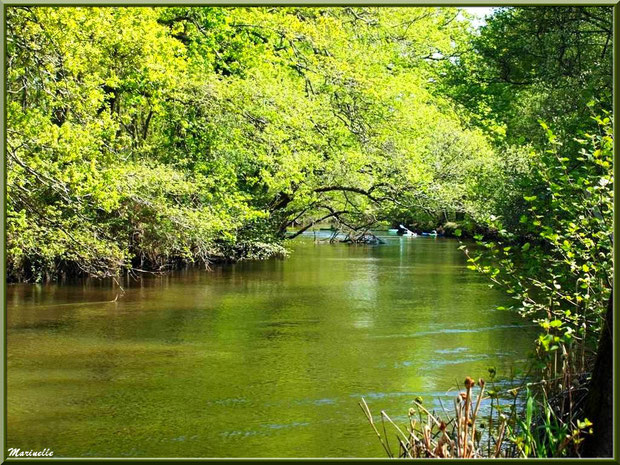 La Leyre et ses promenades en canoës, Sentier du Littoral au lieu-dit Lamothe, Le Teich, Bassin d'Arcachon (33)
