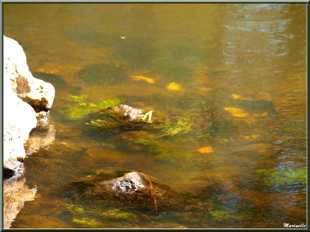 Pierres, mousses et reflets habillent, par endroits, La Leyre, Sentier du Littoral au lieu-dit Lamothe, Le Teich, Bassin d'Arcachon (33)