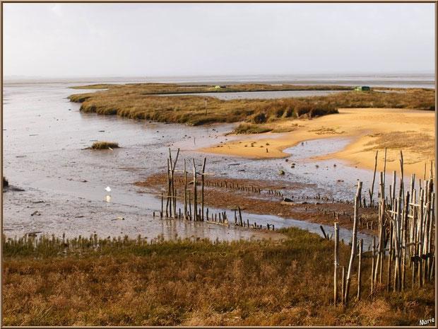 """Petit chenal, appelé """"estey"""", avec une aigrette et tonnes pour la chasse avec leur lac à tonne, côté Bassin sur le Sentier du Littoral, secteur Moulin de Cantarrane, Bassin d'Arcachon"""