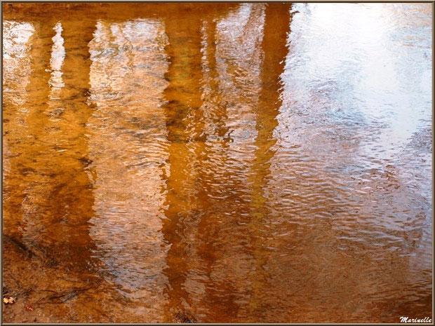 La Leyre et ses reflets d'or en hiver, Sentier du Littoral au lieu-dit Lamothe, Le Teich, Bassin d'Arcachon (33)