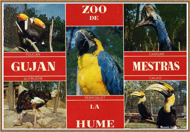 Gujan-Mestras autrefois : ancien Zoo de La Hume, Bassin d'Arcachon (carte postale, collection privée)