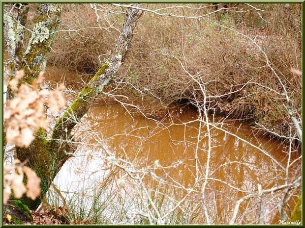 Végétation hivernale et reflets dans un ruisseau bordant le sentier, Sentier du Littoral secteur Pont Neuf, Le Teich, Bassin d'Arcachon (33)