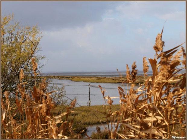 Derrière les roseaux et les tamaris, un petit chenal vers le Bassin, Sentier du Littoral, secteur Moulin de Cantarrane, Bassin d'Arcachon
