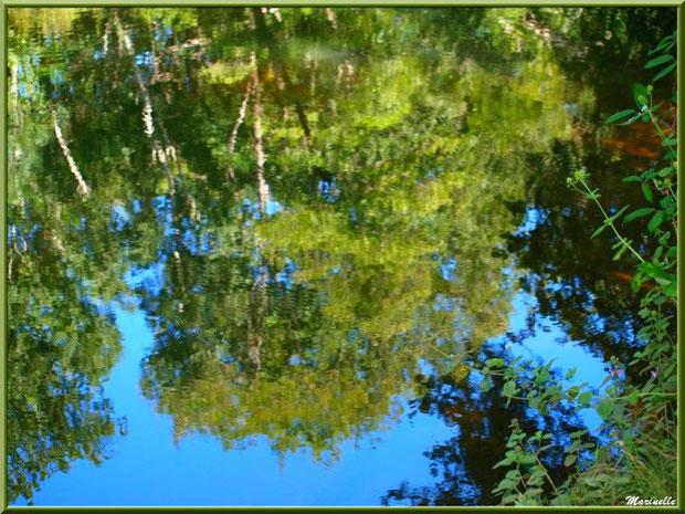 Menthe sauvage et reflets impressionnistes en bordure de La Leyre, Sentier du Littoral au lieu-dit Lamothe, Le Teich, Bassin d'Arcachon (33)