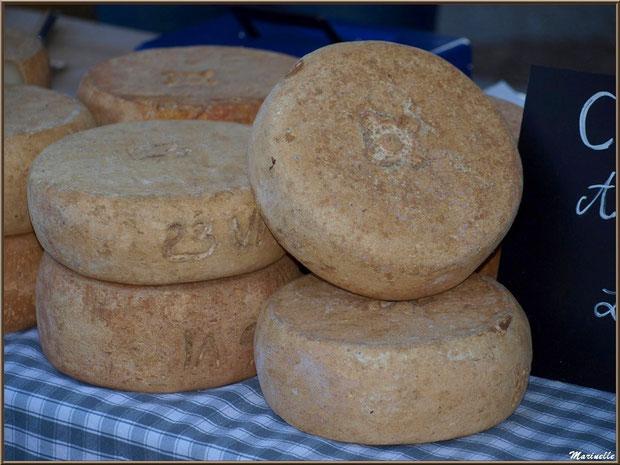 Etal de fromage de chèvre, Fête au Fromage, Hera deu Hromatge, à Laruns en Vallée d'Ossau (64)