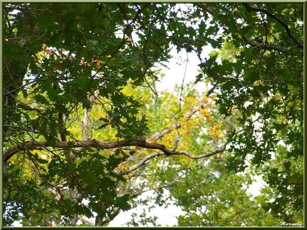 Chênes Pédonculés entre été et automne, flore Bassin d'Arcachon (33)