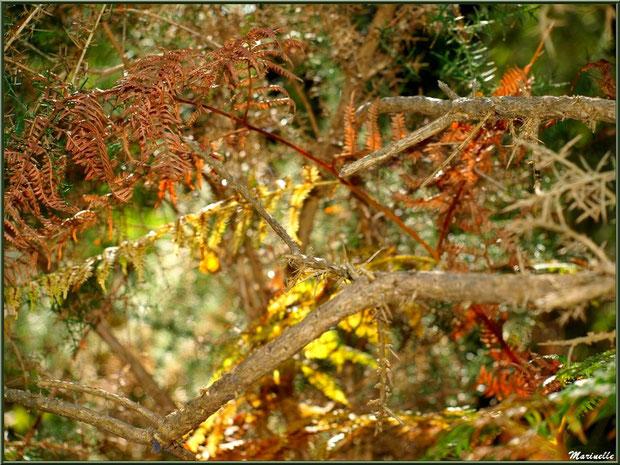 Méli mélo forestier : reflets d'automne dans les broussailles, forêt sur le Bassin d'Arcachon (33)