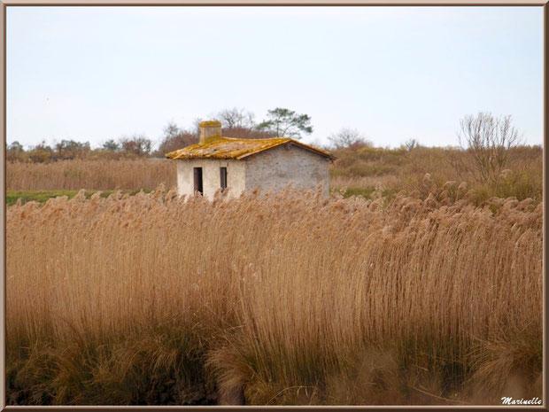 Ancienne maison de gardien de chasse et pêche en bordure de La Leyre parmi les roseaux, Sentier du Littoral, secteur Port du Teich en longeant La Leyre, Le Teich, Bassin d'Arcachon (33)