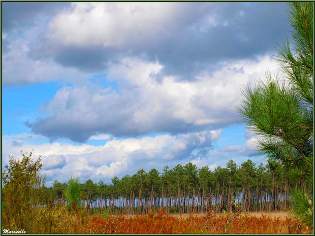 Ciel de traine, forêt sur le Bassin d'Arcachon (33)