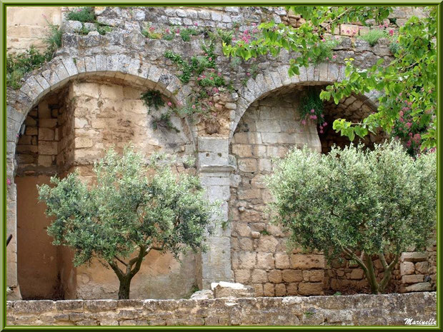 Arcades aux oliviers sur la place du village d'Oppède-le-Vieux, Lubéron (84)