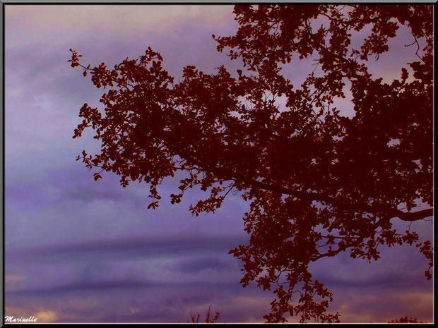 Branche de chêne au soleil couchant, forêt sur le Bassin d'Arcachon (33)