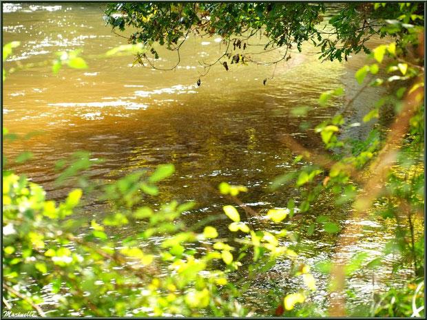 Verdure et reflets en en bordure de La Leyre, Sentier du Littoral au lieu-dit Lamothe, Le Teich, Bassin d'Arcachon (33)