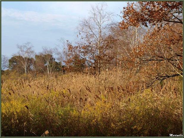 Végétation en bordure du Sentier du Littoral, secteur Port du Teich en longeant La Leyre, Le Teich, Bassin d'Arcachon (33)