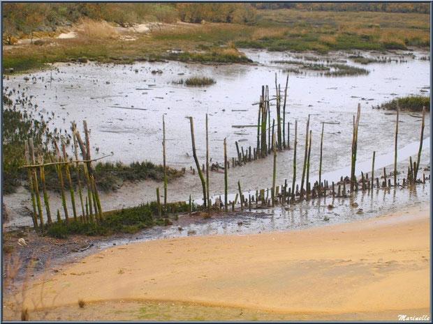 Chenal de sortie d'écluse, côté Bassin, Sentier du Littoral côté Bassin, secteur Moulin de Cantarrane, Bassin d'Arcachon