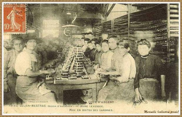 Gujan-Mestras autrefois : Mise en boîtes des sardines à l'Usine-Conserverie Levesque, Bassin d'Arcachon (carte postale, collection privée)