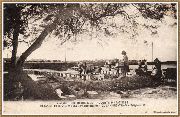 Gujan-Mestras autrefois : Huîtrerie Raoul Daycard, Bassin d'Arcachon (carte postale, collection privée)